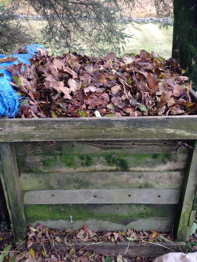 After twice as much time, I managed to collect a sizeable amount of leaves for the compost.